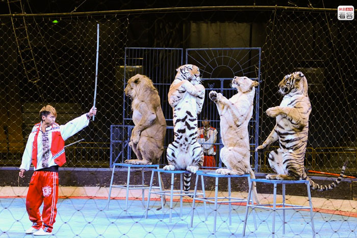 The slow death of Chinese rural circuses - China Underground