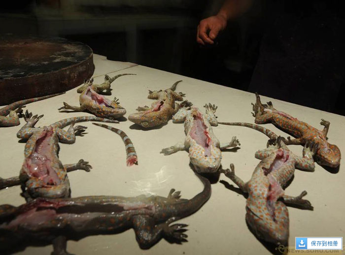 abuses against animals in Traditional Chinese Medicine, 20 pictures of Traditional Chinese Medicine animal markets (Graphic Content)